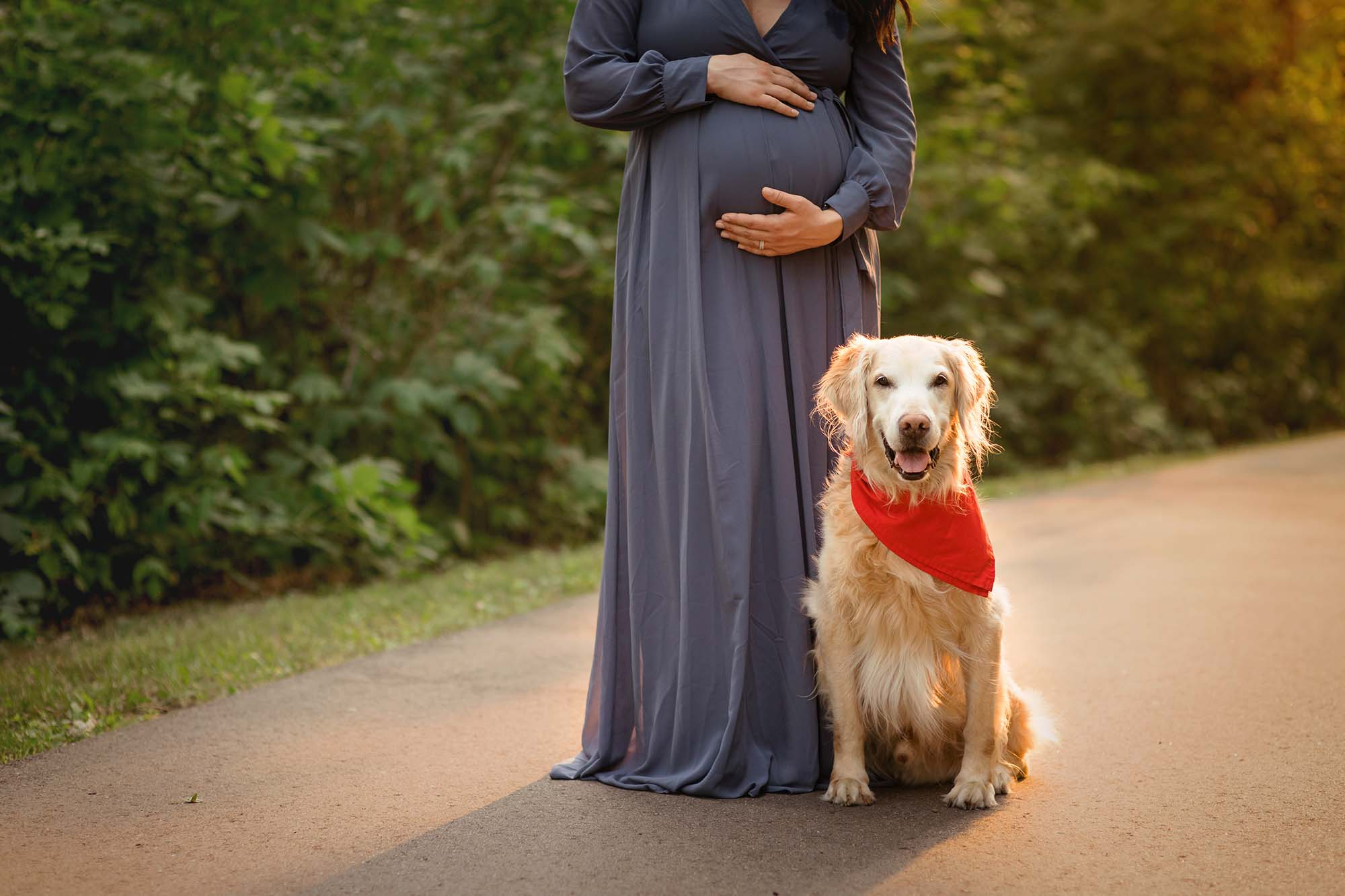 evening backlit maternity photos with dog maple grove mn