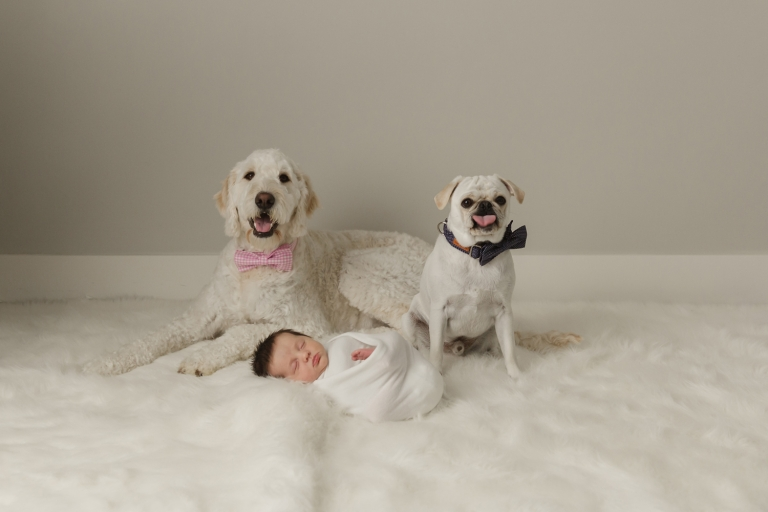 newborn baby with dogs in bowties